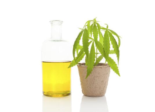 Cannabisolie – forskellen på CBD-olie og THC-olie